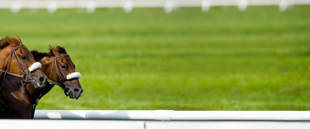 Wyścigi konne zakłady - jak obstawiać gonitwy koni?